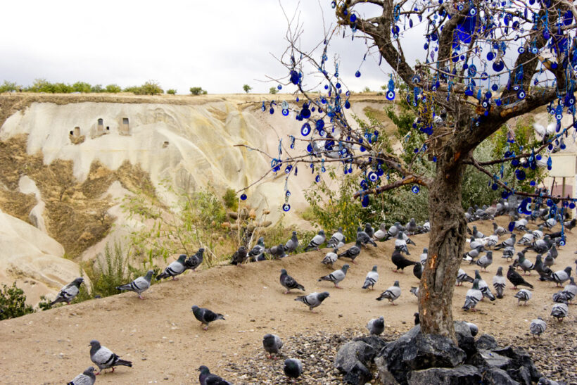 evil-eye-tree-pigeons-uchisar-cappadocia-turkey